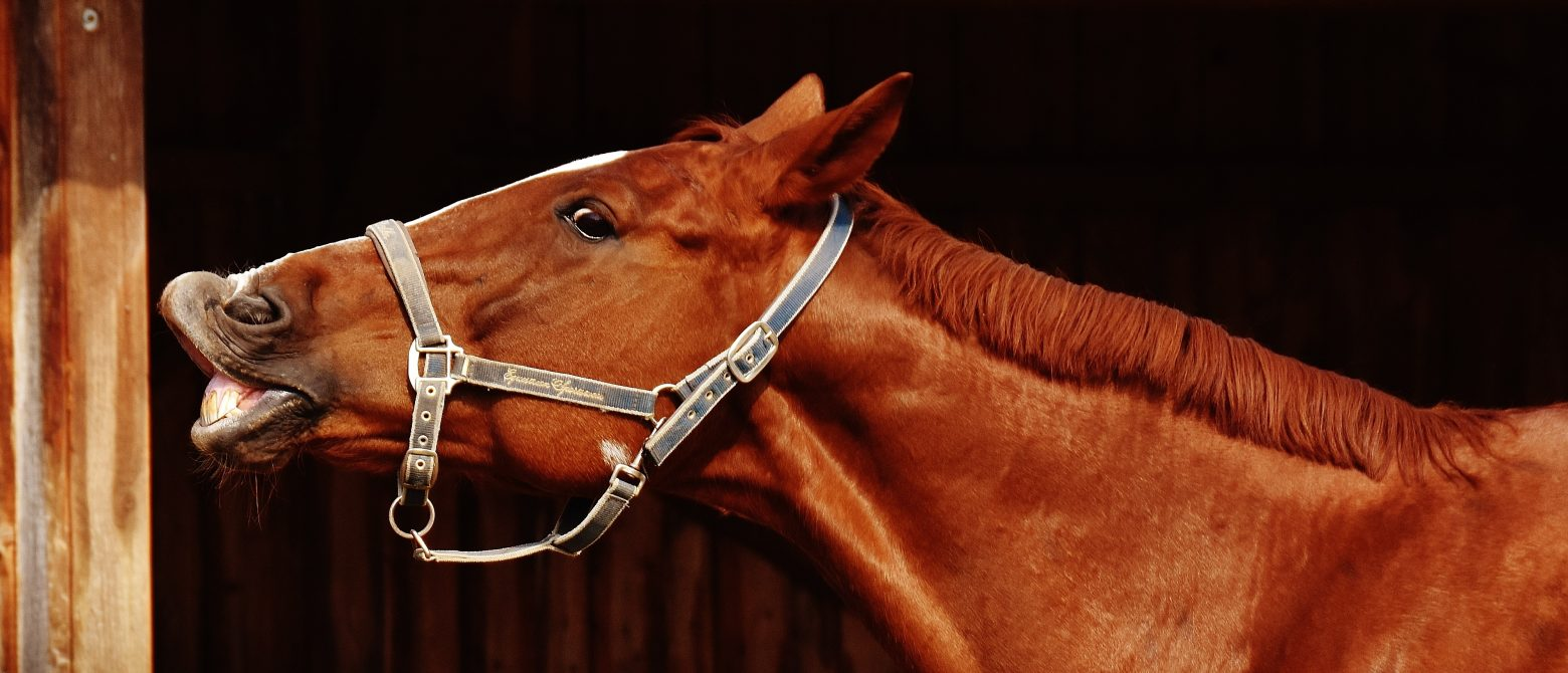 horse-1704624