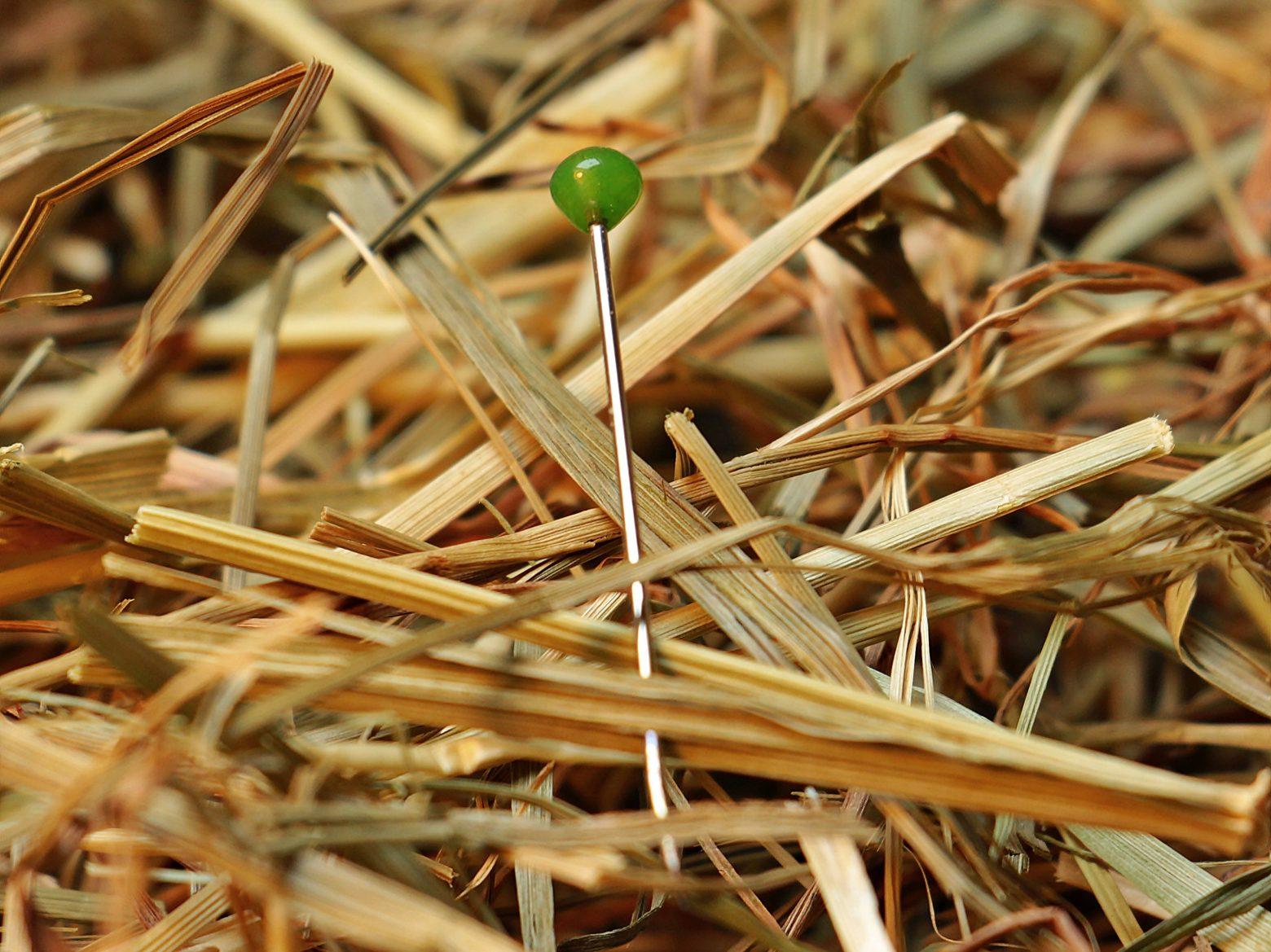 needle-in-a-haystack-1752846