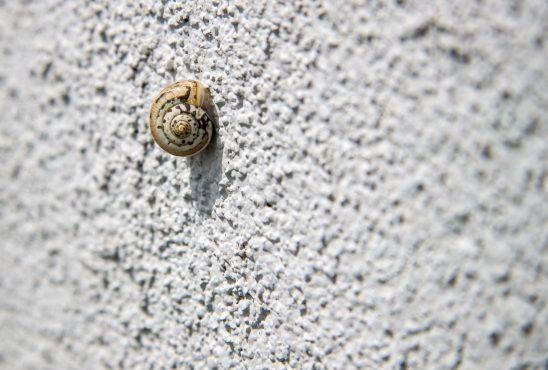 snail-1792651