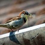 sparrow-827374