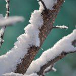 winter-1381775