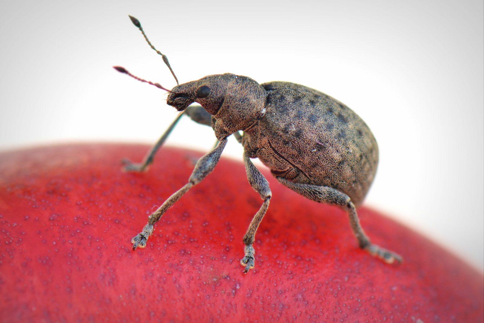 bug-369229