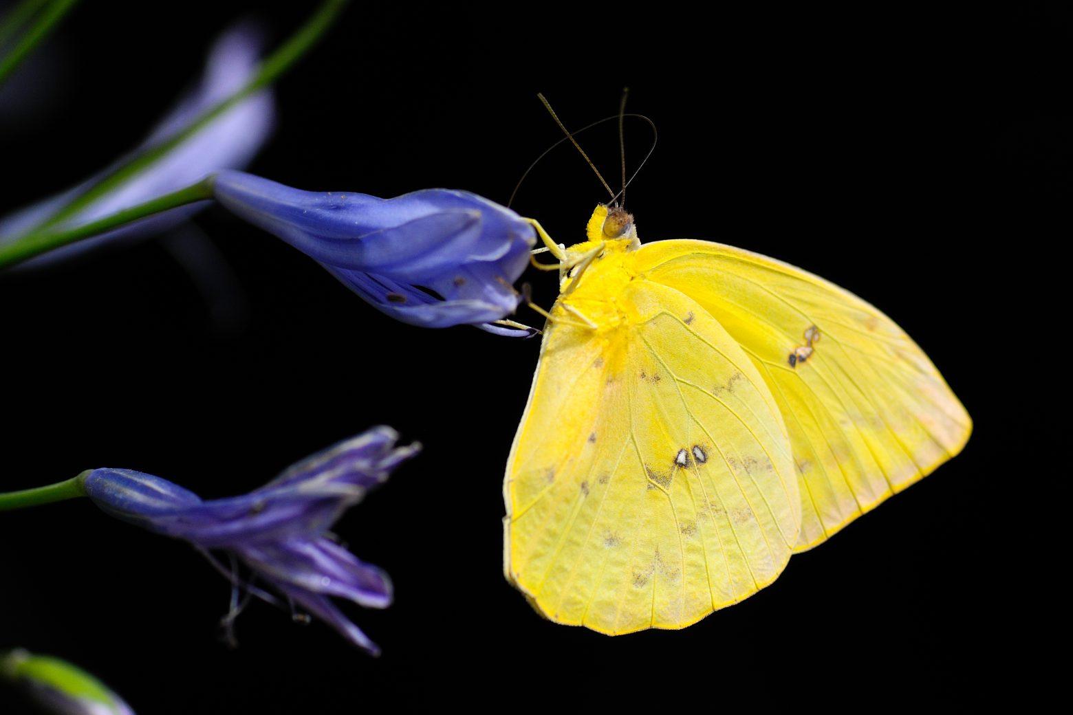 butterfly-1413678