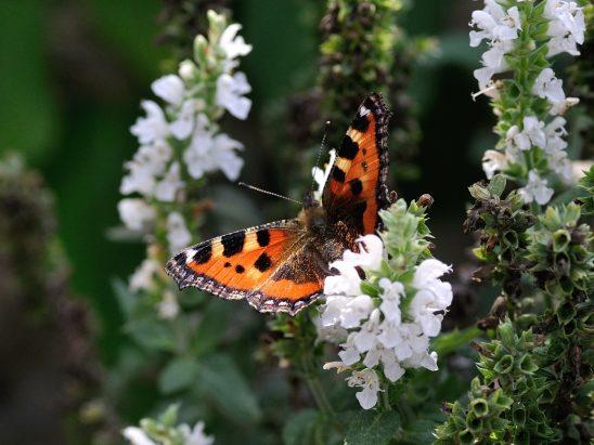 butterfly-199115