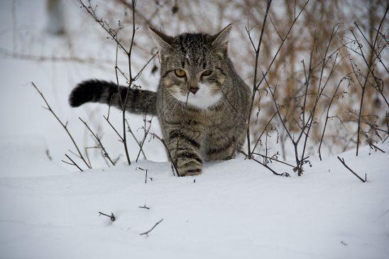 cat-188088