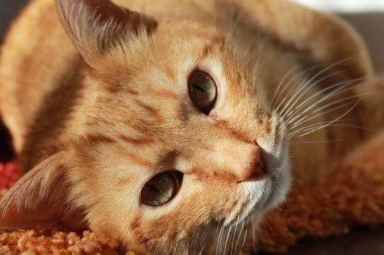 cat-636172