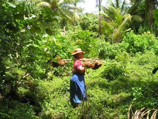 coconuts-46