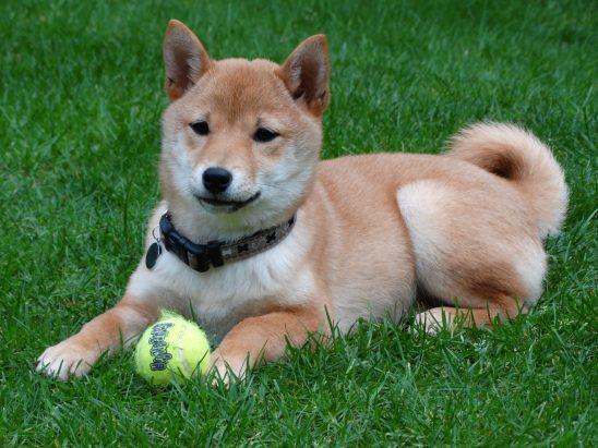 dog-2074370