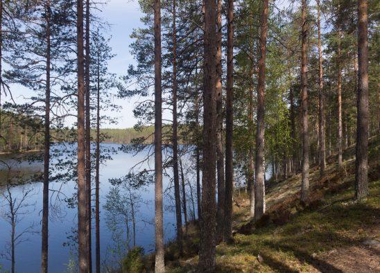 finnish-2073681