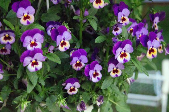 flower-2074064