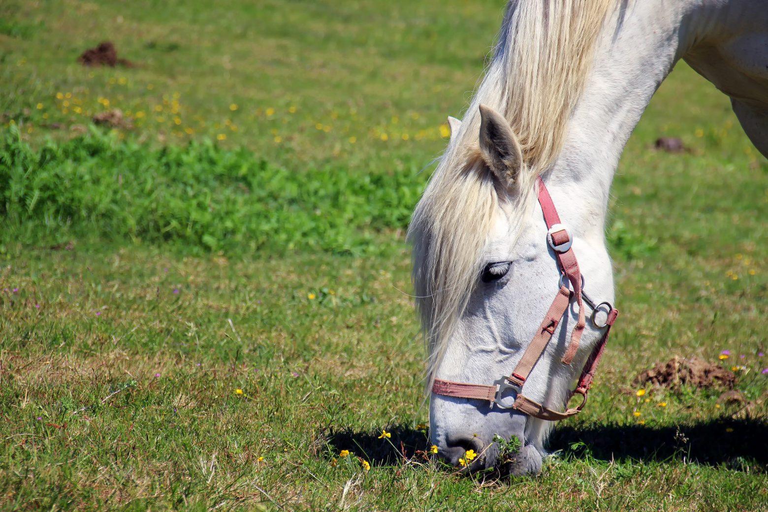 horse-1753383
