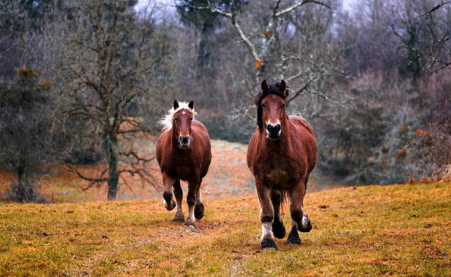 horses-1984977
