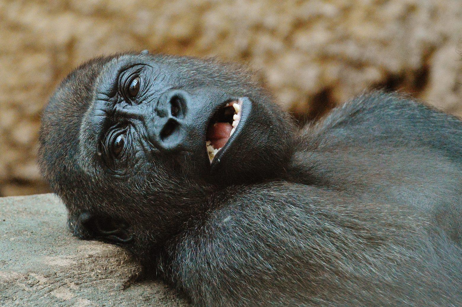 monkey-1346590