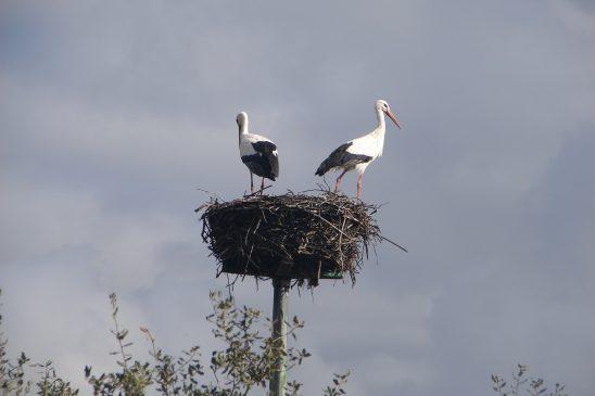 nest-2073794