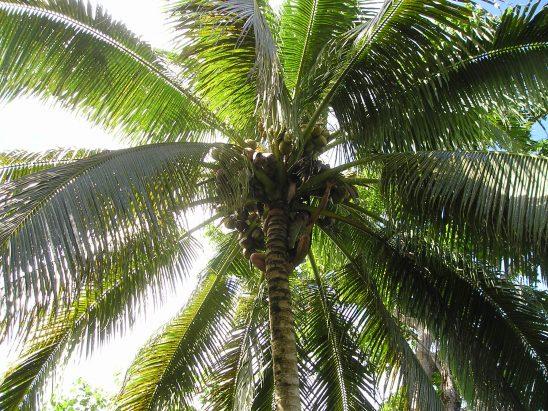 palm-56