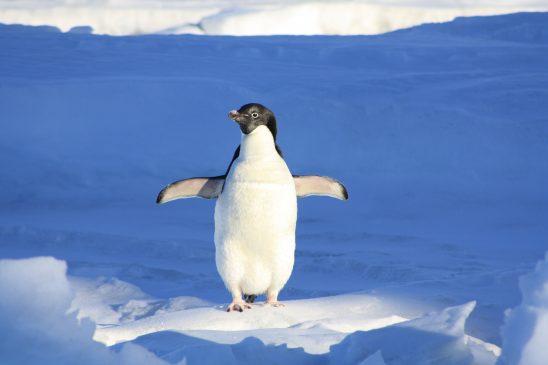 penguin-56101