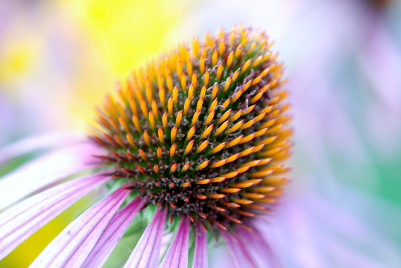 bloom-22786