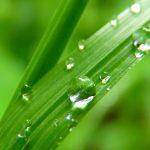 drop-of-water-7720