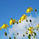 flower-22260