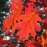 leaf-8287