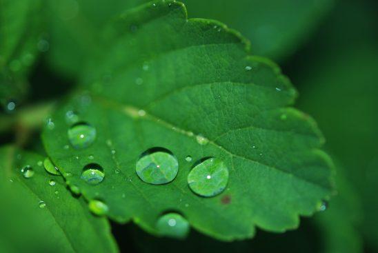 leaf-8701