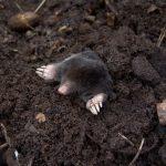 mole-13298