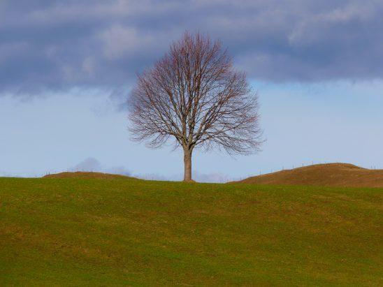 tree-4700