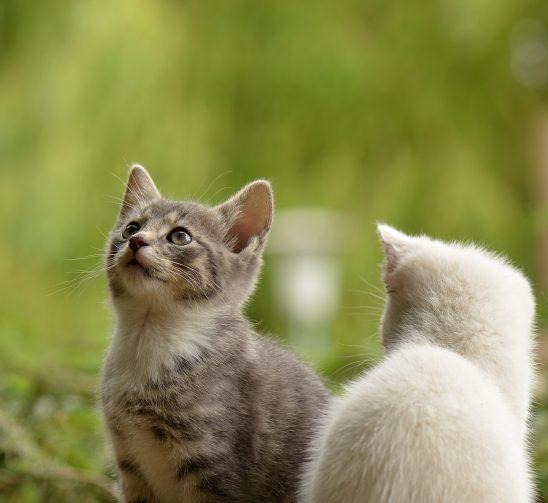 cat-2273598
