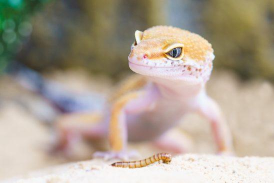 gecko-2299365