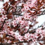 spring-2276402