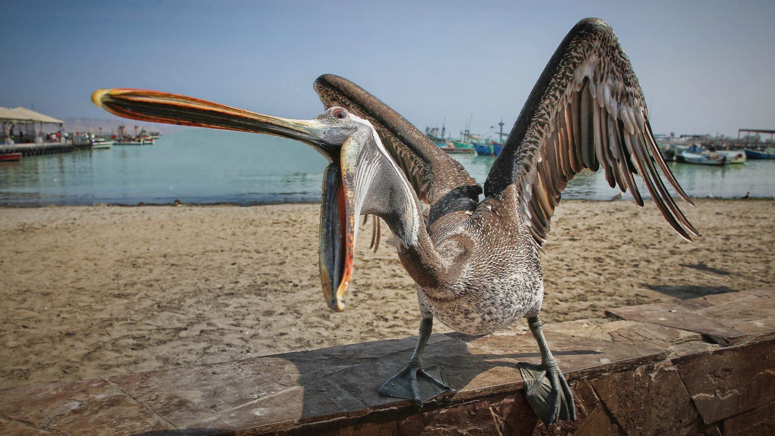 a-hungry-seabirds-2346445