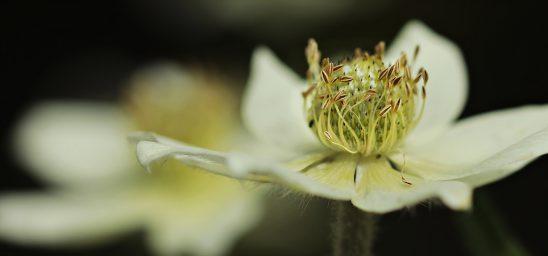 anemone-2337010