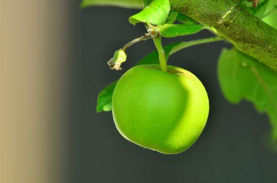 apple-1532055