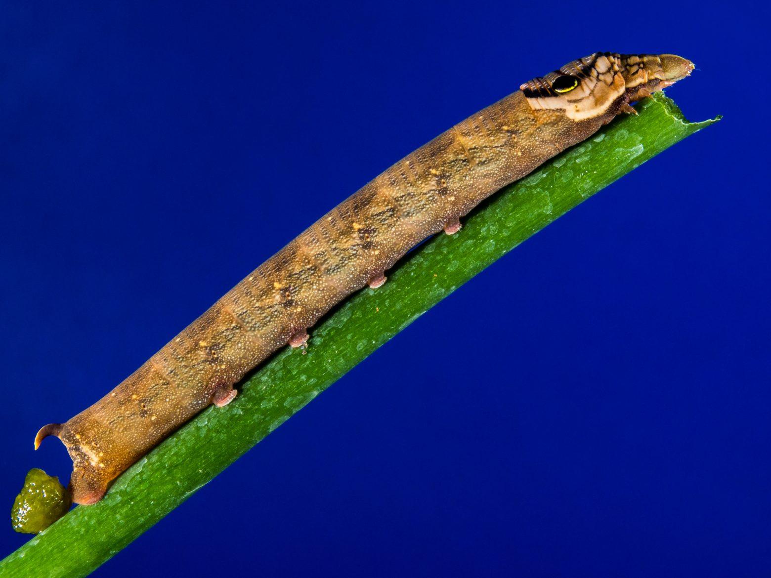 caterpillar-208616