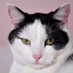cats-796437