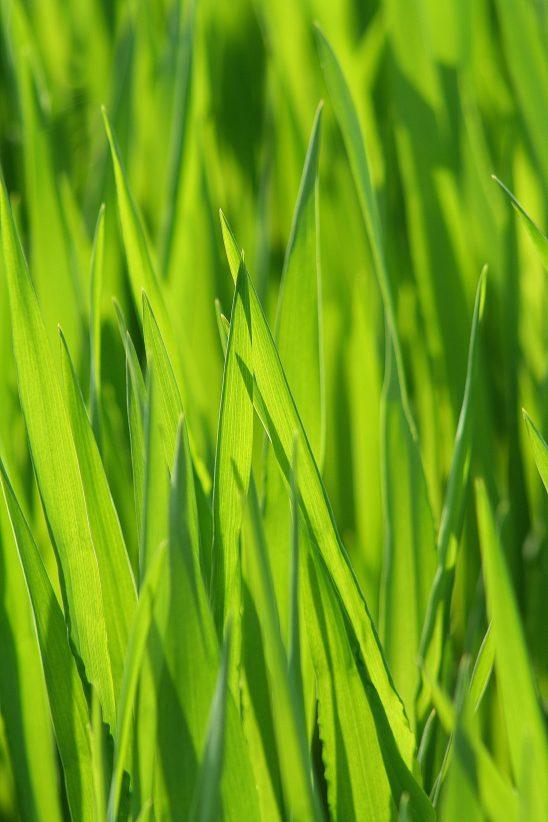 grass-2312139