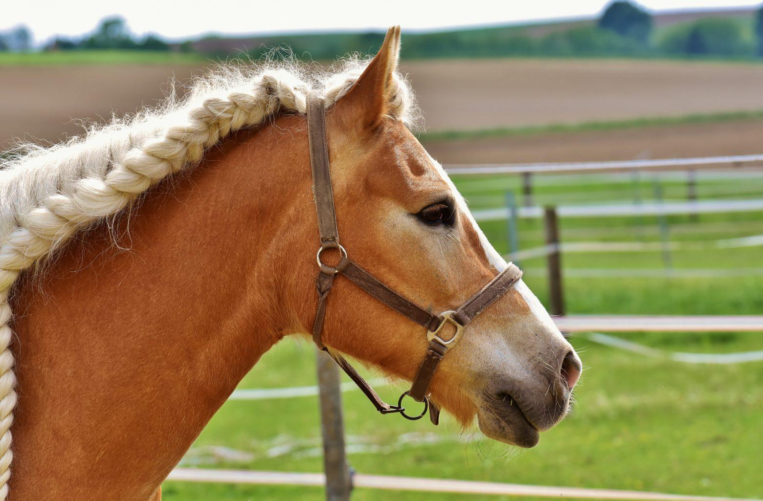 horse-2344218