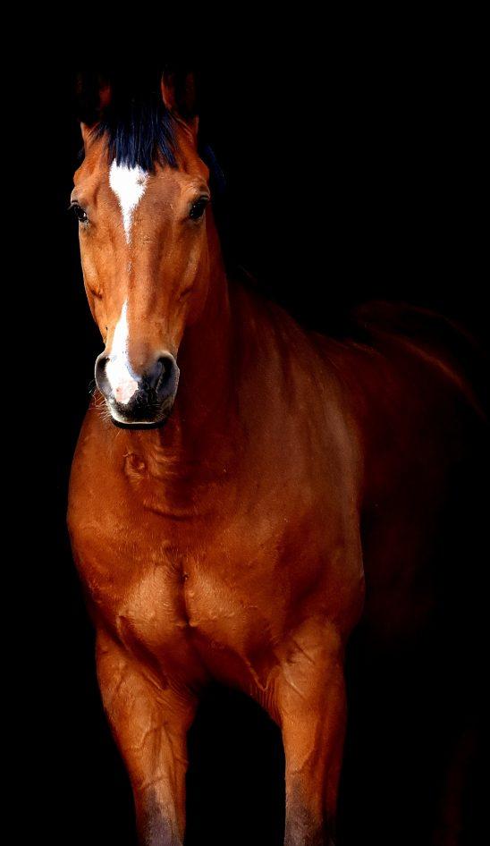 horse-2344396
