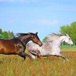 horse-2348773