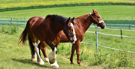 horses-2344689