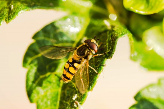 hover-fly-1672677