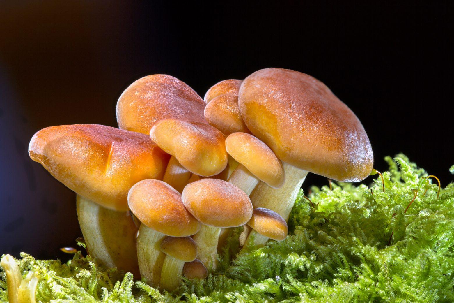mushroom-2279558