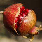 pomegranate-185456