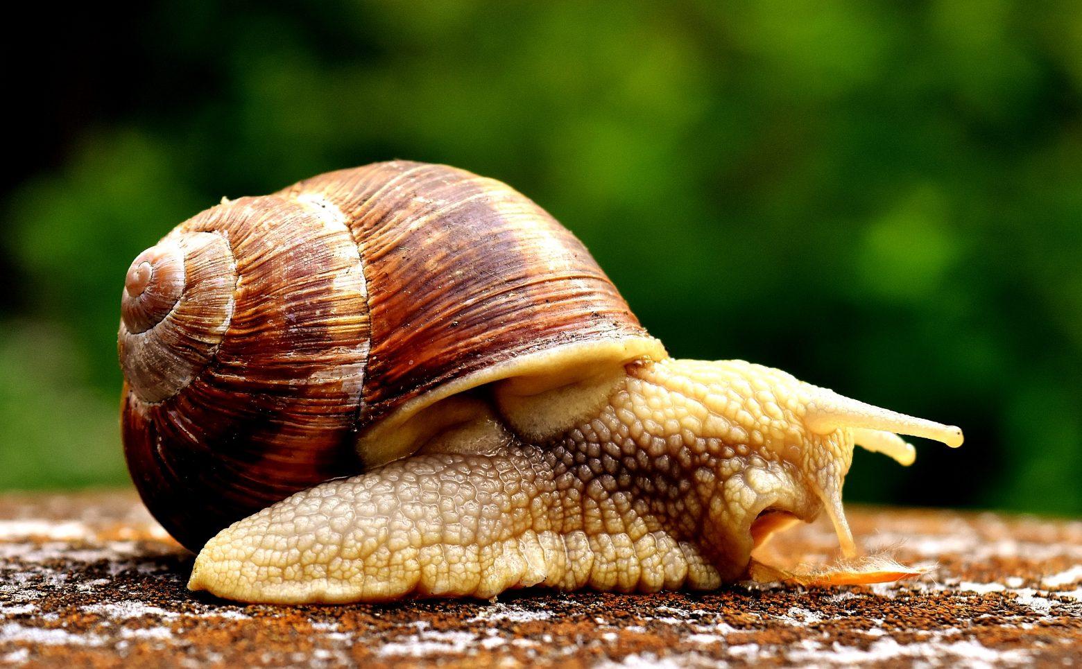snail-2331169