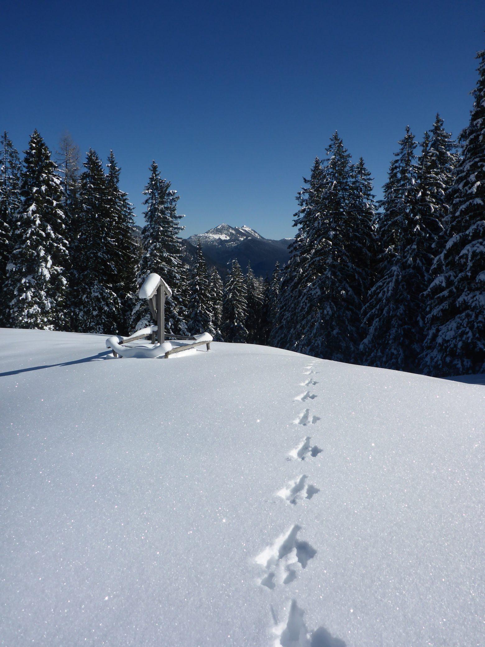 snow-2302398