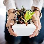 succulents-2347550