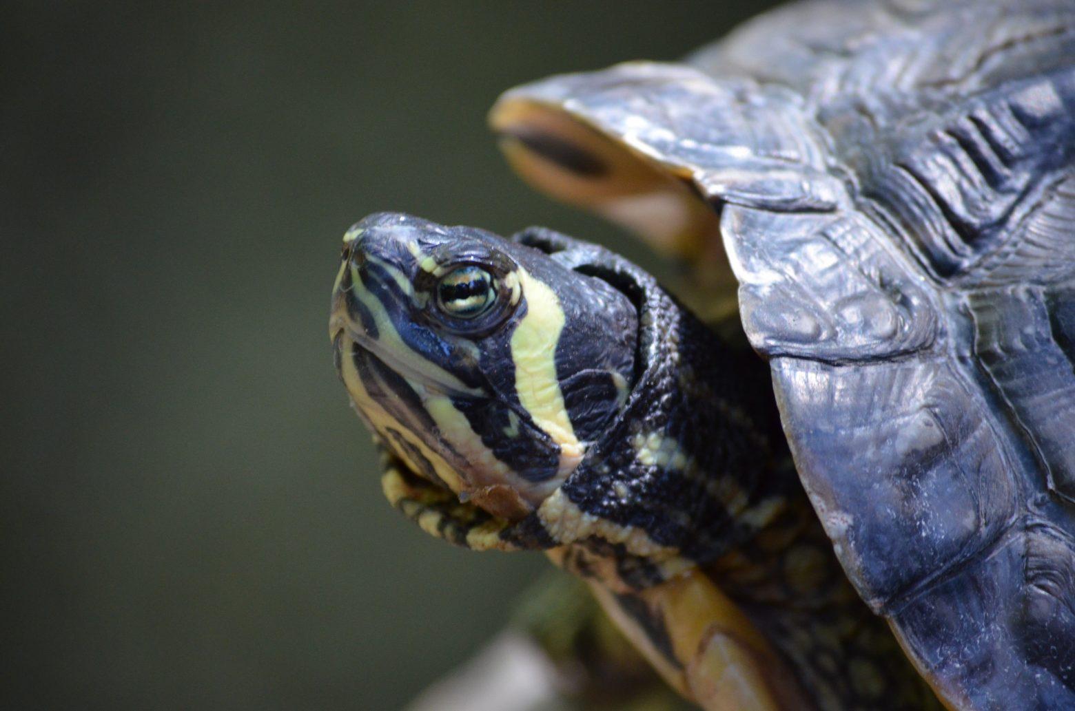 turtle-2115800