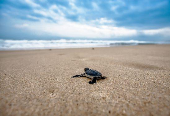 turtle-2201433