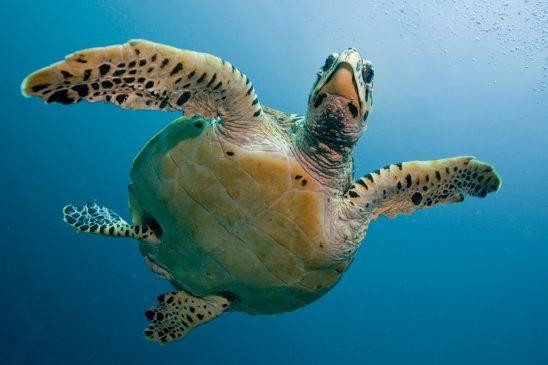 turtle-2250720