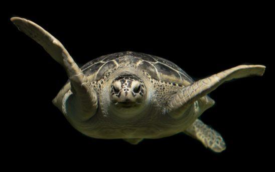 turtle-2293894